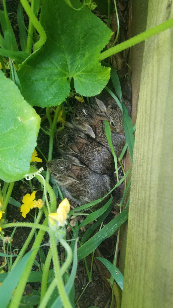Нашел в своем саду этих ребят. Очень милые!