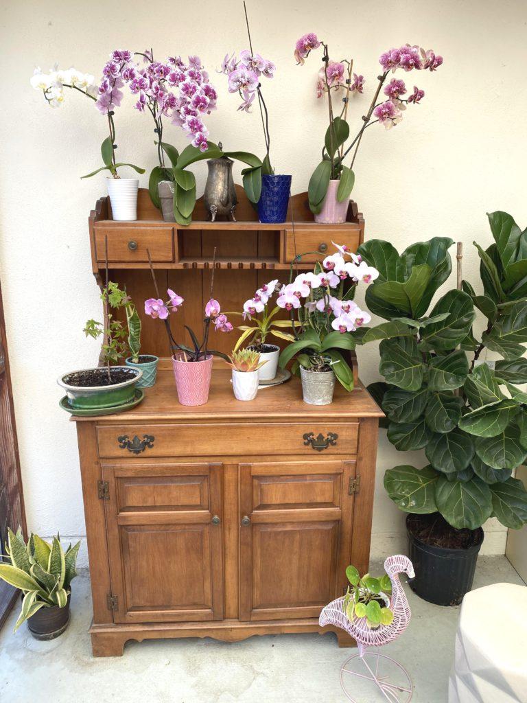 Спасенные орхидеи украшают сад