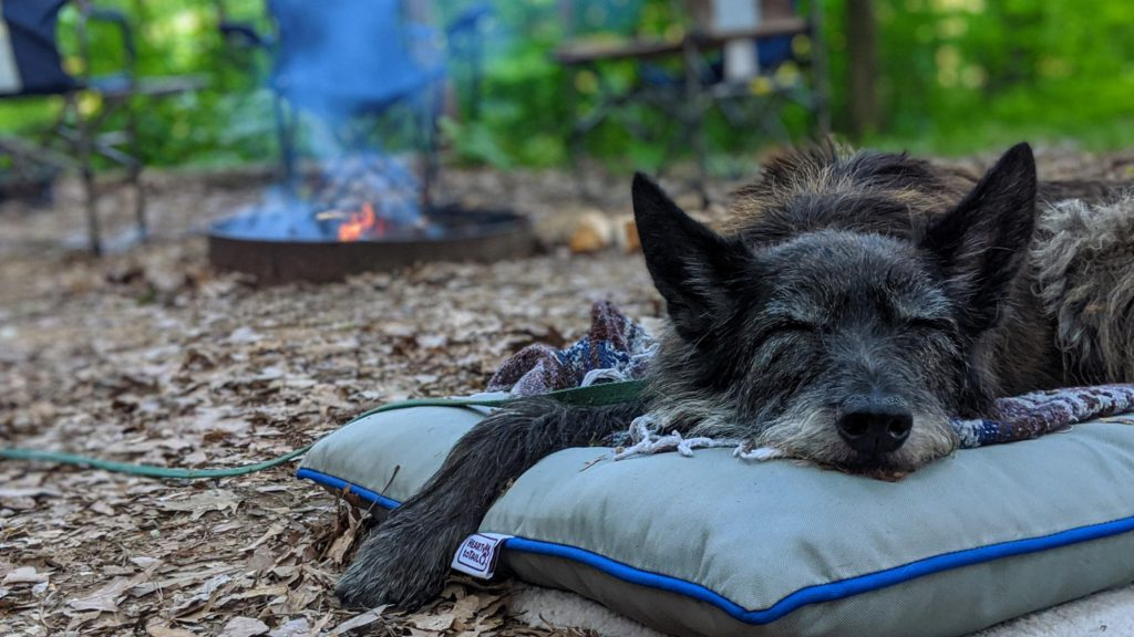 Счастливый пёс Керри - рад любому походу!