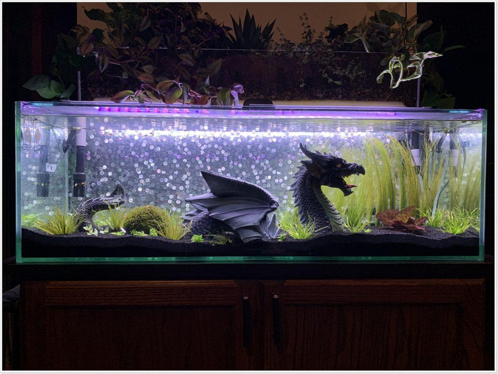 Дракон в аквариуме
