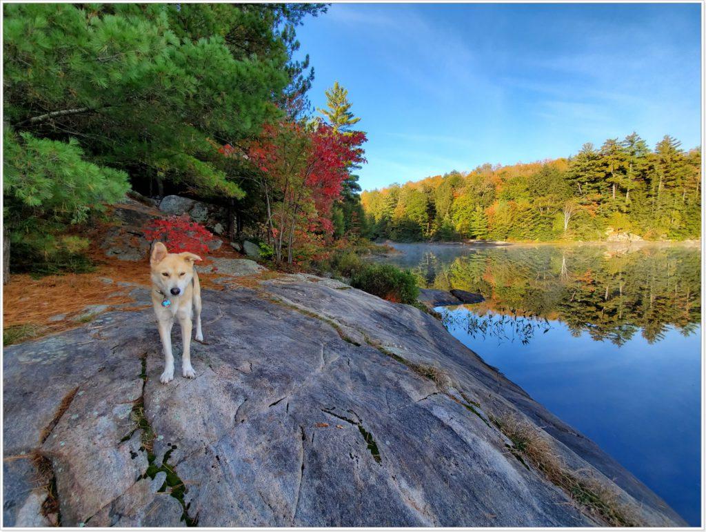 Собака у озера