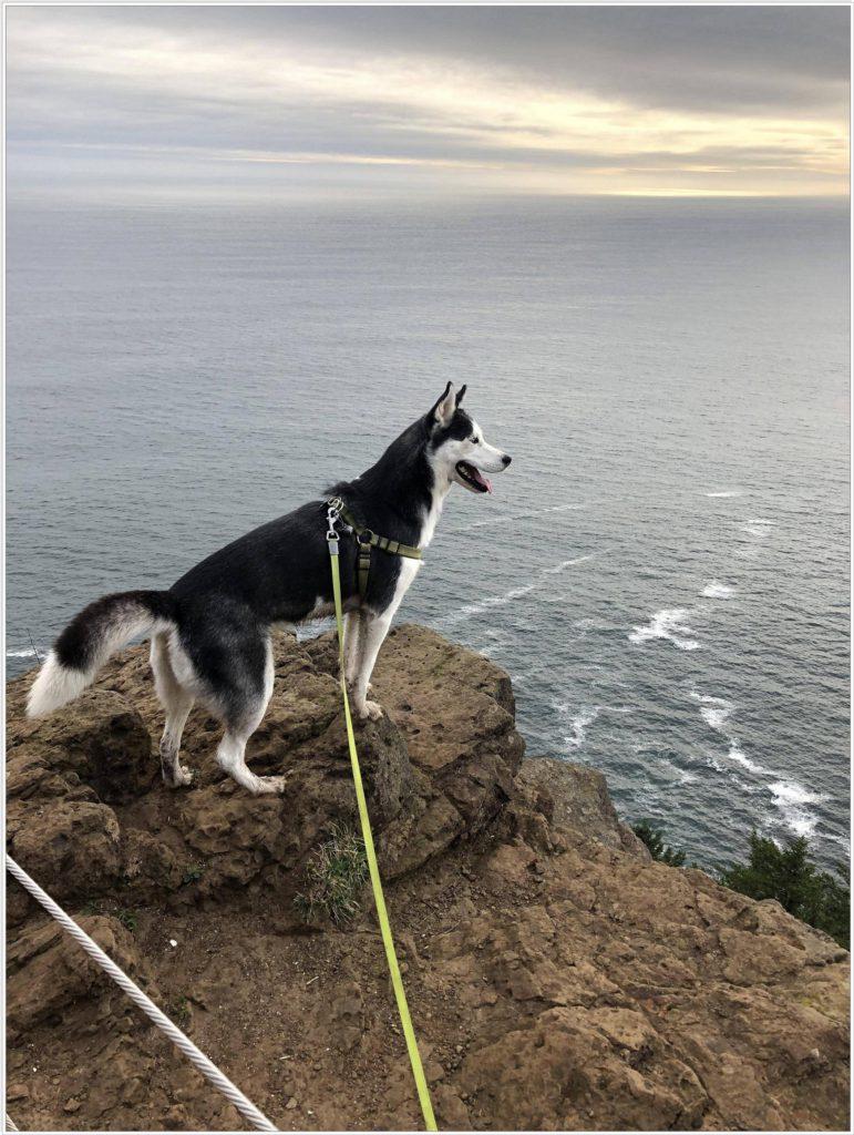 Пеший поход с собакой хаски