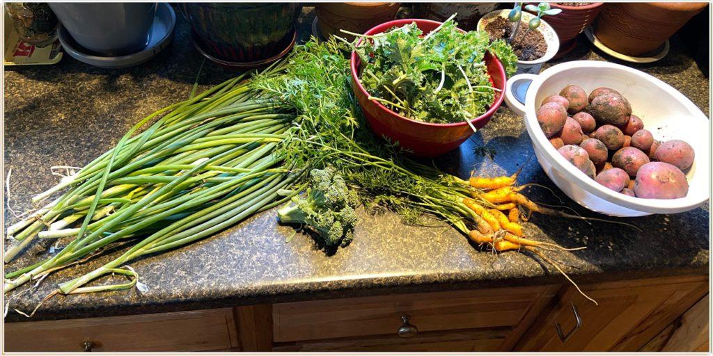 Собрали урожай, сегодня будет прекрасный стол!
