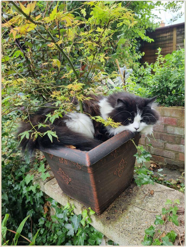 Кот спит в горшке с растением